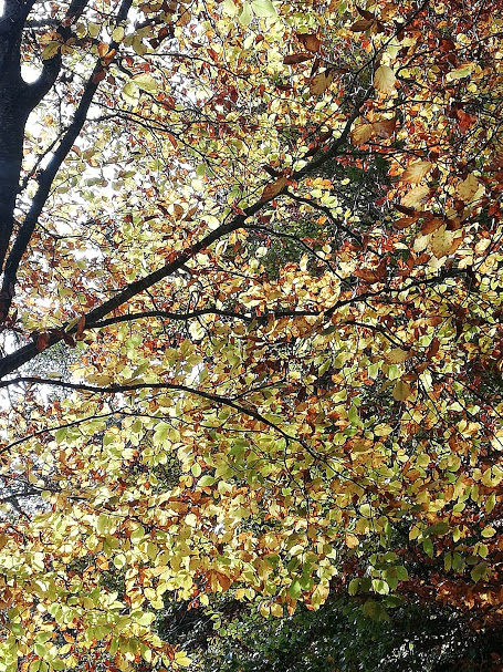 Promenades d'automne...